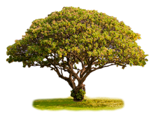 Absolute Economical Funeral Home tree image